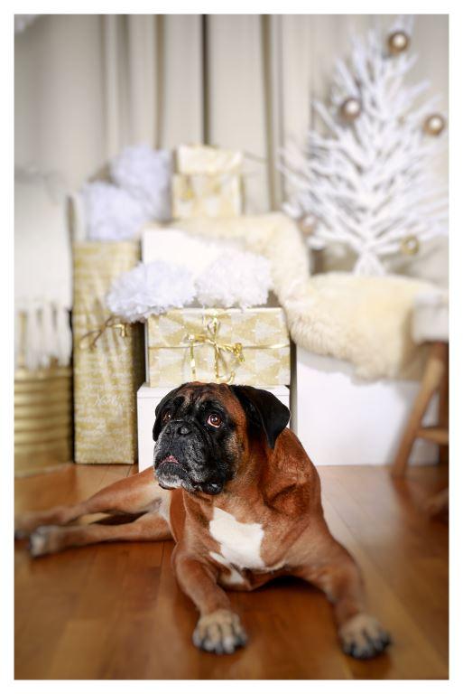 Personalberatung Alexandra Franz wünscht Frohe Weihnachten